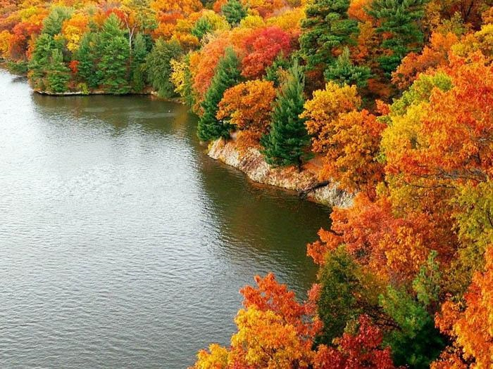 Осень в лесу красивые картинки для детей и родителей (18)