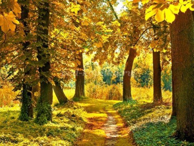 Осень в лесу красивые картинки для детей и родителей (22)