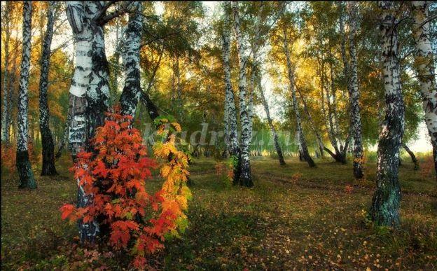 Осень в лесу красивые картинки для детей и родителей (24)