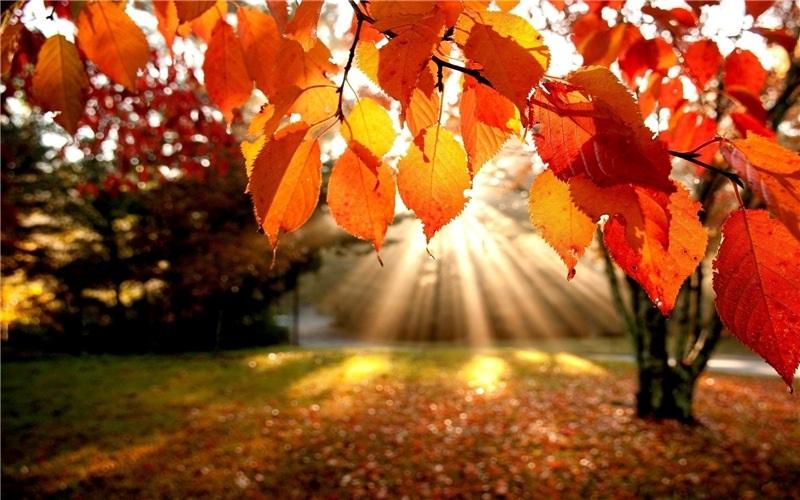 Открытки на День собирания осенних листьев 15 октября (1)