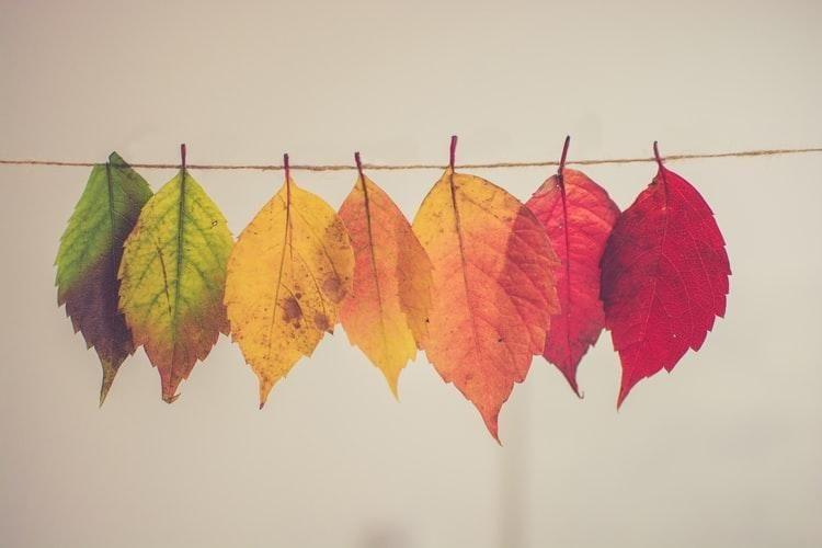Открытки на День собирания осенних листьев 15 октября (11)