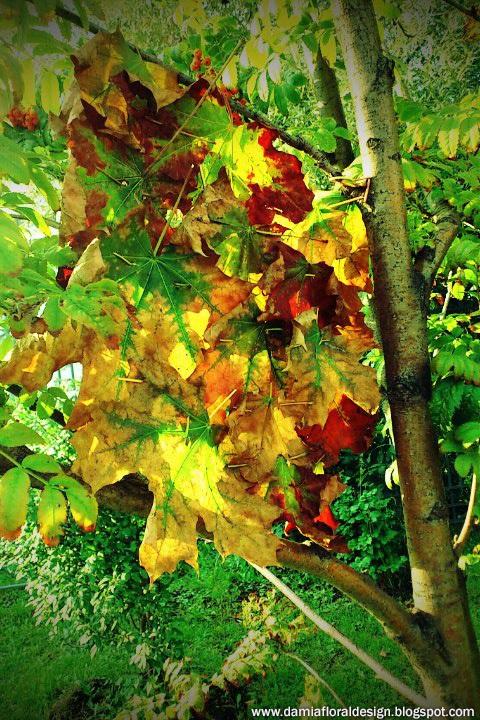 Открытки на День собирания осенних листьев 15 октября (12)