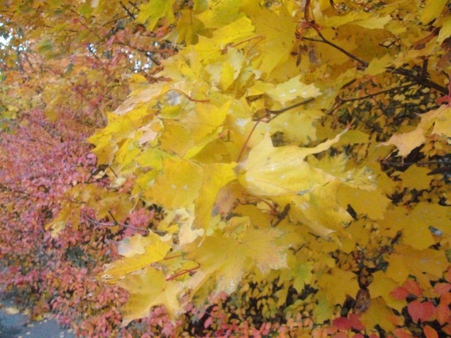 Открытки на День собирания осенних листьев 15 октября (13)