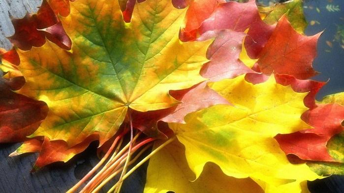Открытки на День собирания осенних листьев 15 октября (7)