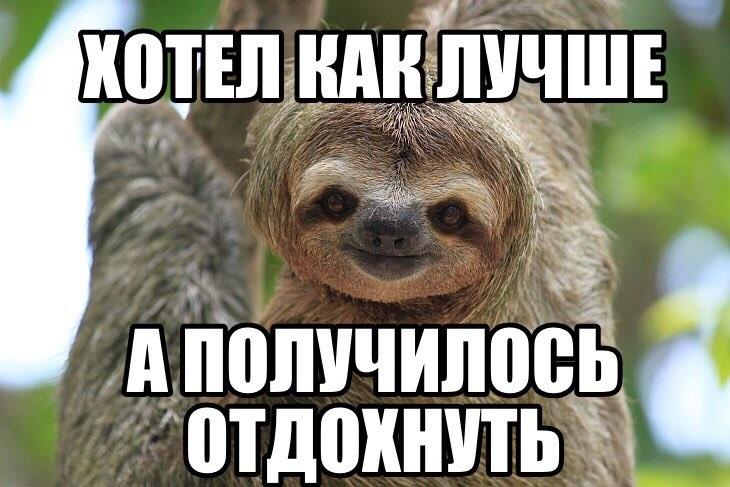 Открытки на Международный день ленивца 20 октября (1)