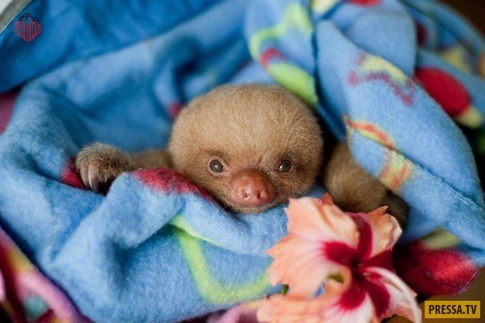 Открытки на Международный день ленивца 20 октября (10)