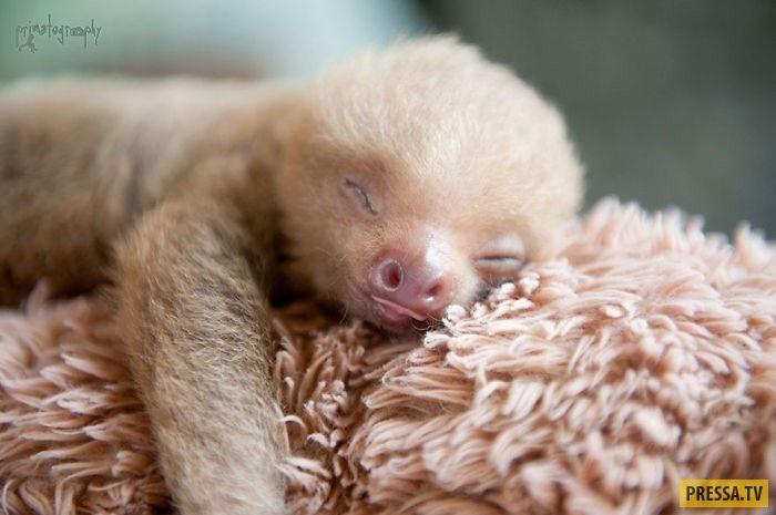Открытки на Международный день ленивца 20 октября (11)