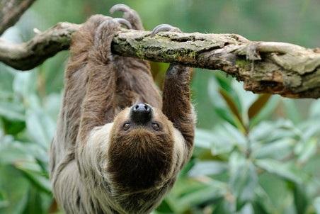Открытки на Международный день ленивца 20 октября (13)