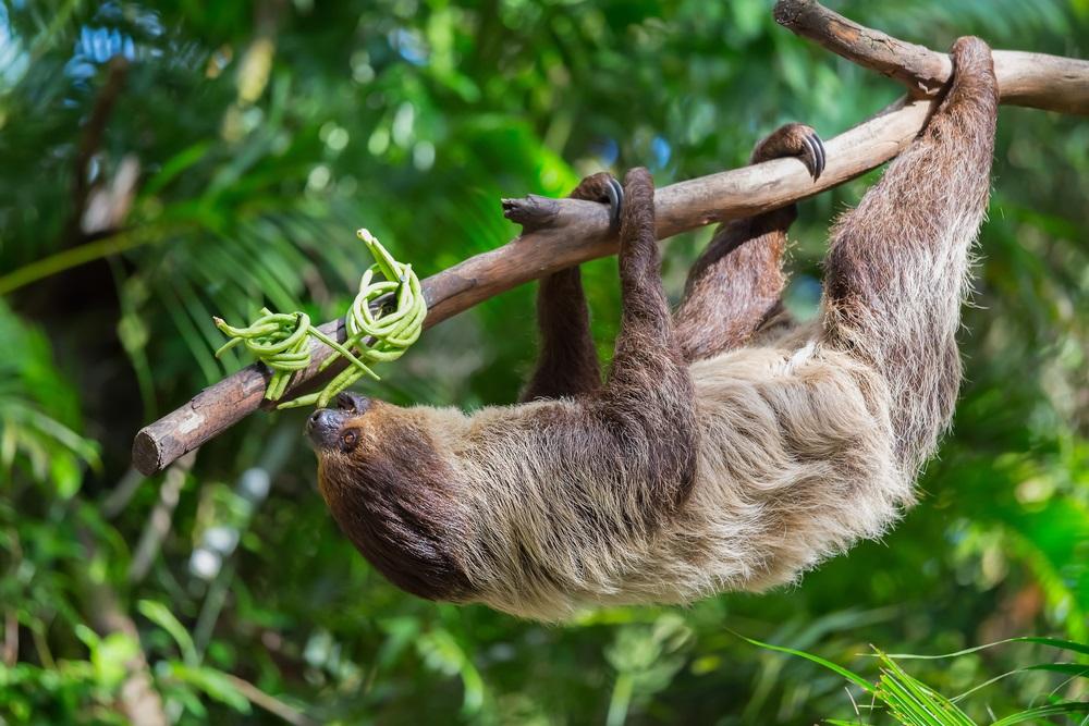 Открытки на Международный день ленивца 20 октября (14)