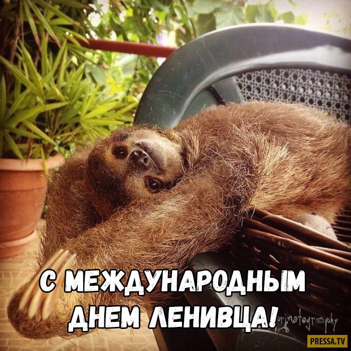 Открытки на Международный день ленивца 20 октября (16)