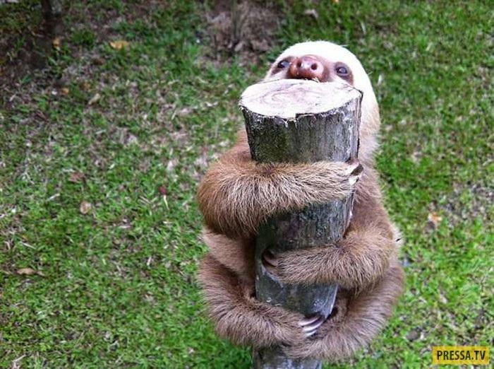Открытки на Международный день ленивца 20 октября (17)