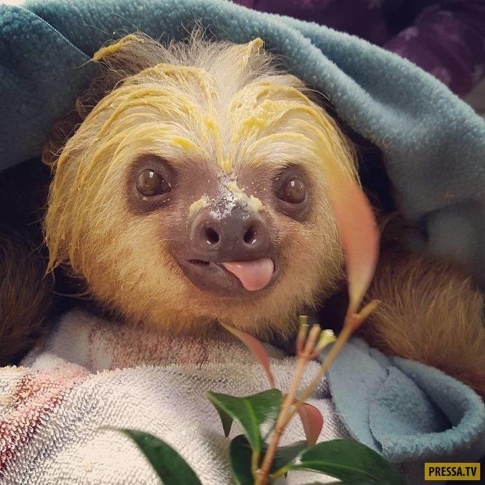 Открытки на Международный день ленивца 20 октября (18)