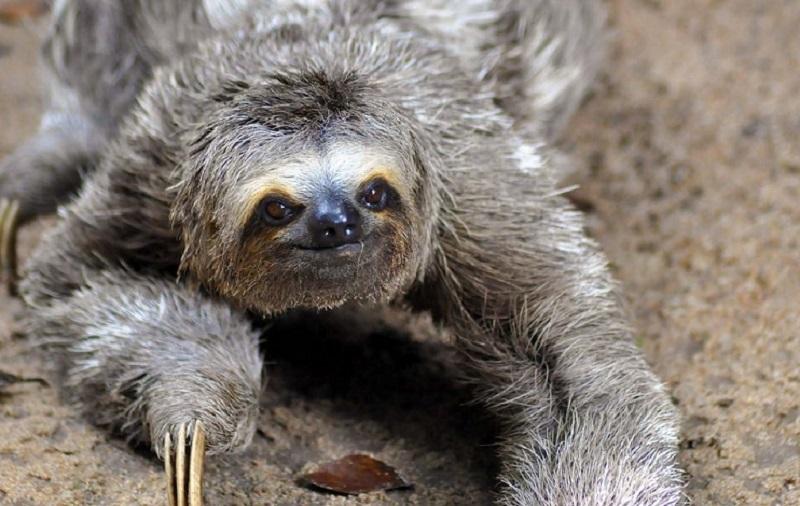 Открытки на Международный день ленивца 20 октября (19)