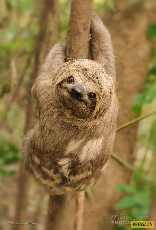 Открытки на Международный день ленивца 20 октября (2)