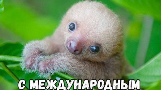 Открытки на Международный день ленивца 20 октября (20)