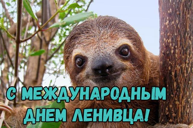 Открытки на Международный день ленивца 20 октября (21)