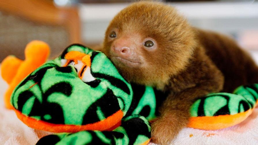 Открытки на Международный день ленивца 20 октября (23)
