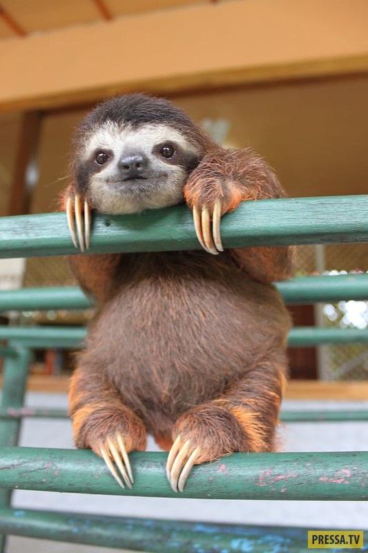 Открытки на Международный день ленивца 20 октября (3)