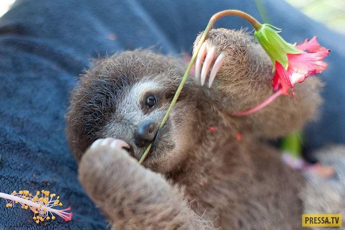 Открытки на Международный день ленивца 20 октября (5)