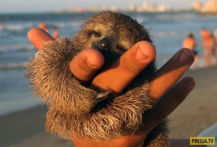 Открытки на Международный день ленивца 20 октября (7)