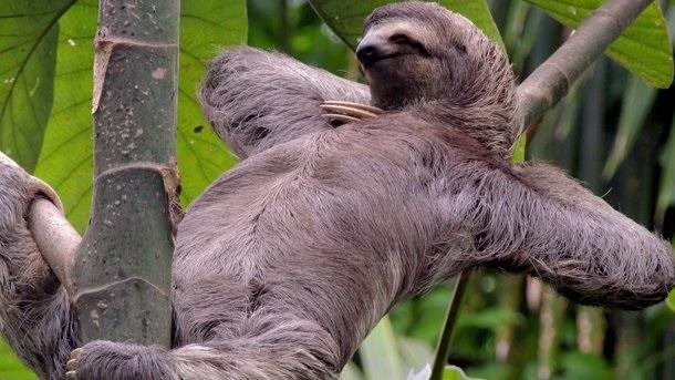 Открытки на Международный день ленивца 20 октября (8)