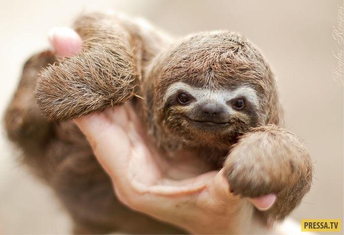 Открытки на Международный день ленивца 20 октября (9)