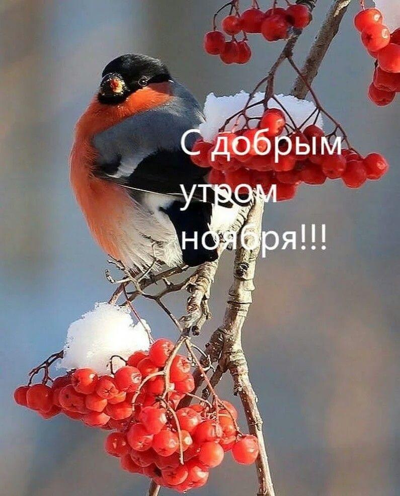 Доброе утро для друзей в ноябрь - подборка открыток (1)