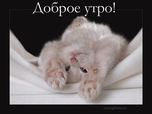 Мышка доброе утро красивые открытки с пожеланиями (1)
