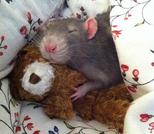 Мышка доброе утро красивые открытки с пожеланиями (10)