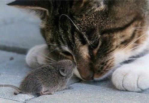 Мышка доброе утро красивые открытки с пожеланиями (18)