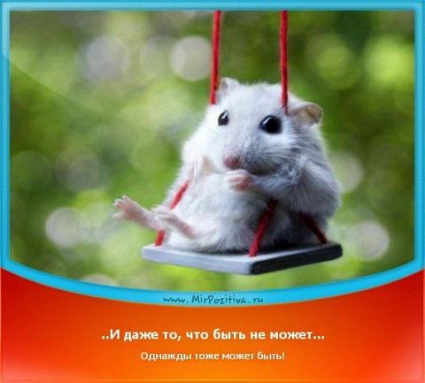 Мышка доброе утро красивые открытки с пожеланиями (20)