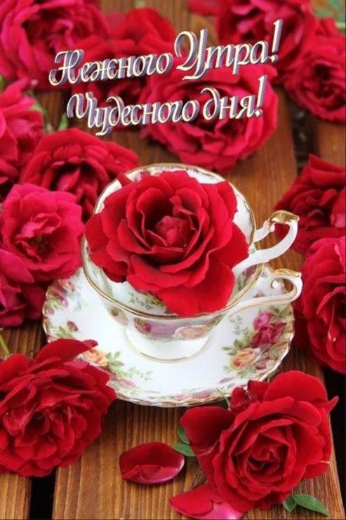 Доброе утро с розами красивые открытки для любимых (14)