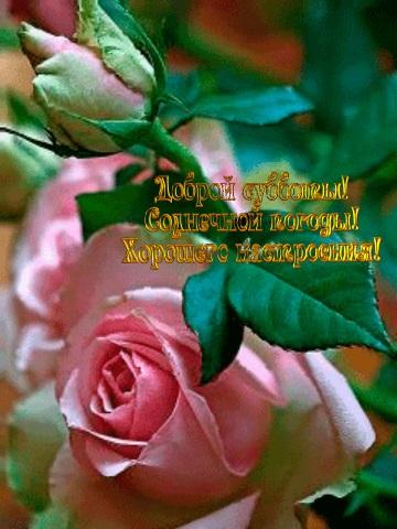 Доброе утро с розами красивые открытки для любимых (20)