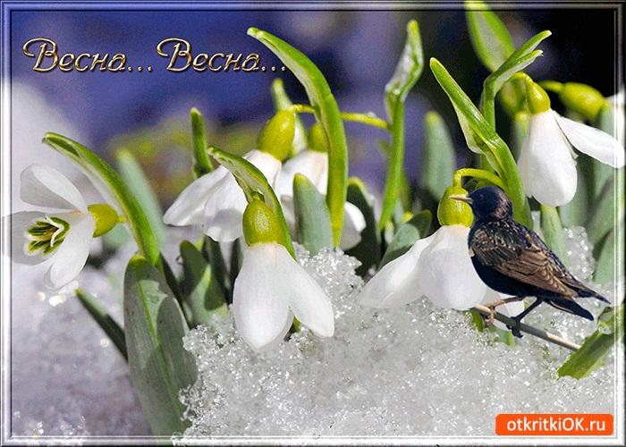 Красивые открытки Вот и весна пришла (19)