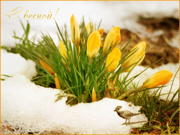 Красивые открытки Вот и весна пришла (5)