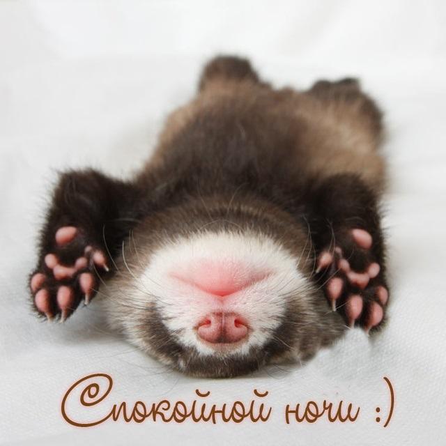Спокойной ночи февраля красивые открытки - подборка (7)