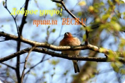 Красивые открытки весна пришла, с добрым утром - подборка (11)