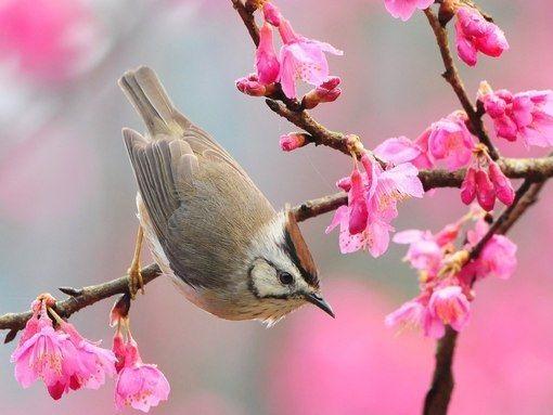 Красивые открытки весна пришла, с добрым утром - подборка (12)