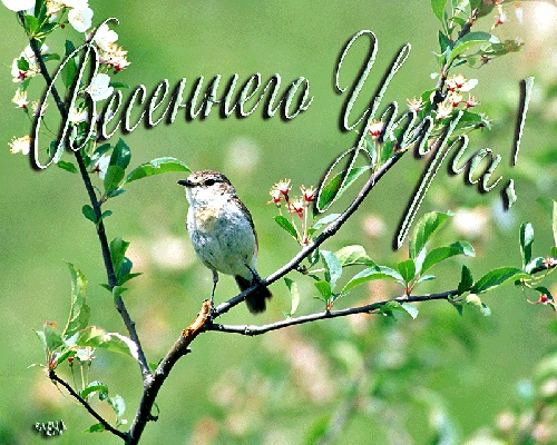 Красивые открытки весна пришла, с добрым утром - подборка (3)