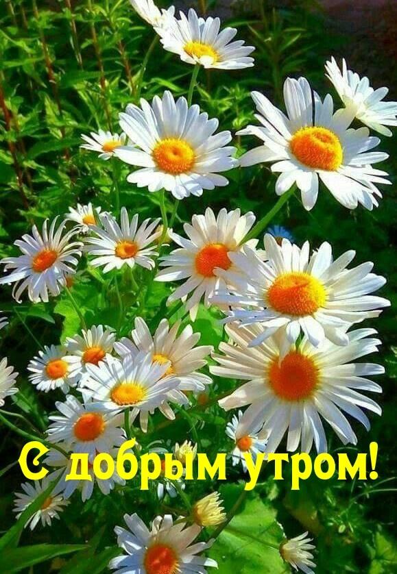 Картинки с добрым утром апрель для друзей и близких (14)