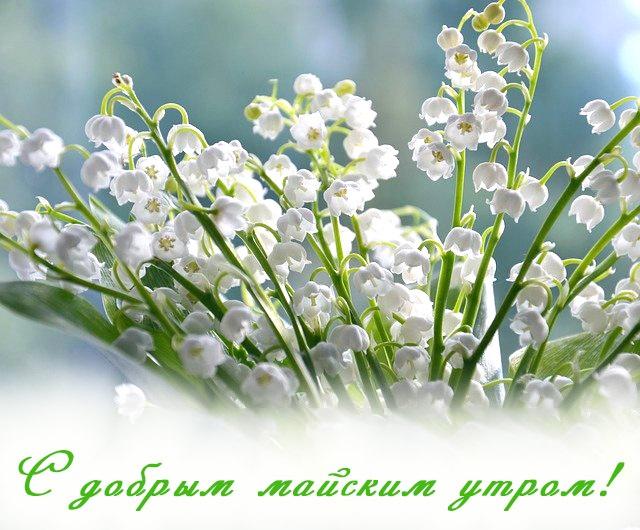 Красивые открытки с добрым майским утром - подборка (15)