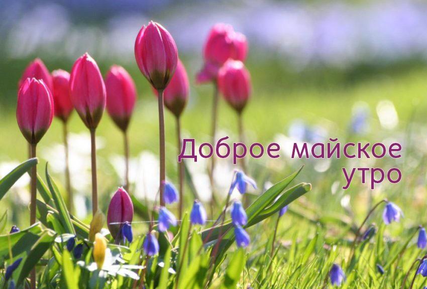 Красивые удивительные картинки с добрым утром весны в май (10)