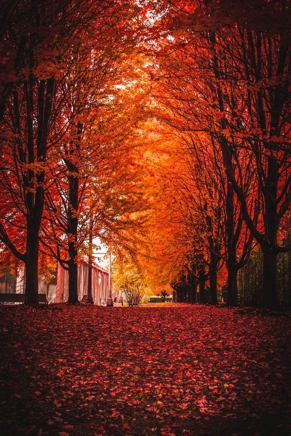 Красивые фото про осень (1)