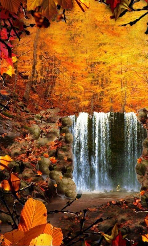 Красивые фото про осень (10)