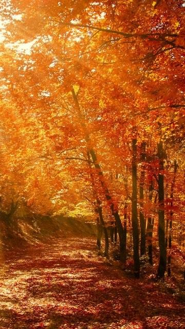 Красивые фото про осень (11)
