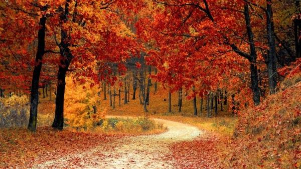 Красивые фото про осень (12)