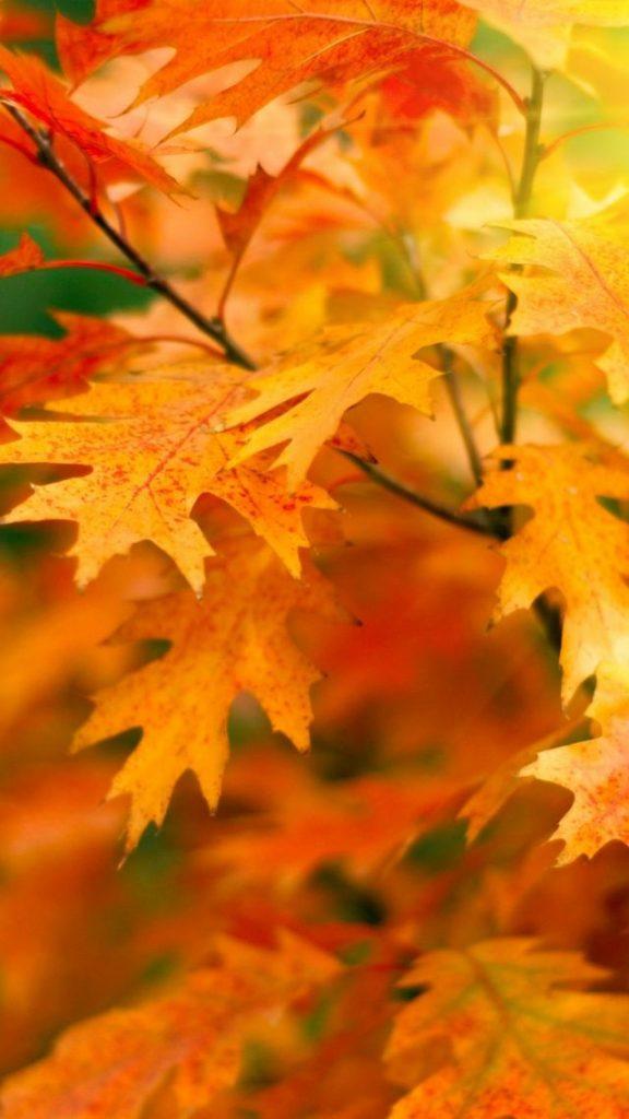 Красивые фото про осень (15)