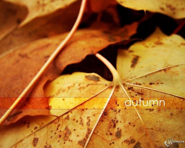 Красивые фото про осень (16)