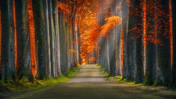 Красивые фото про осень (19)