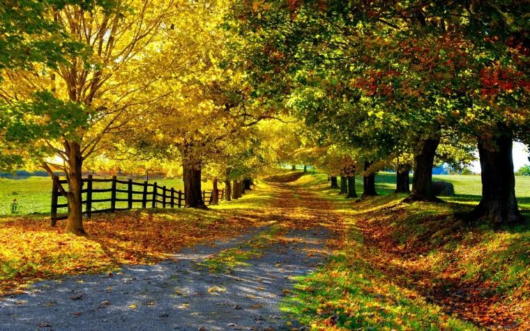 Красивые фото про осень (2)